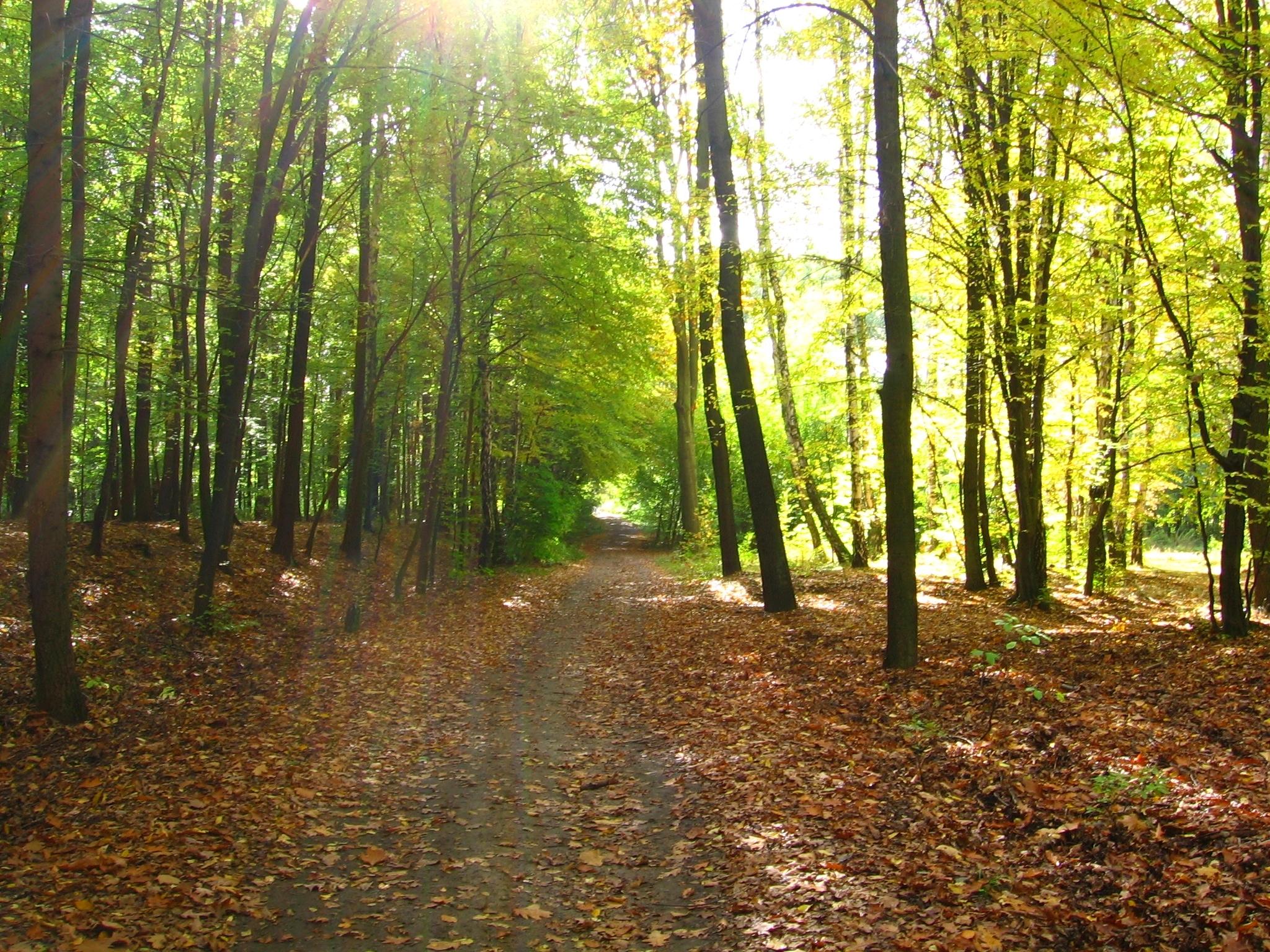 Bilderesultat for tur i skogen